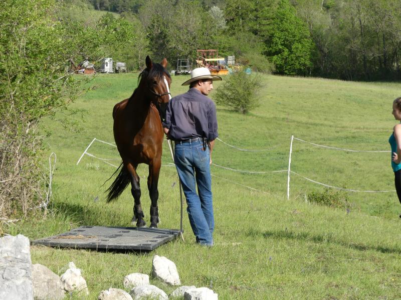 Cours particuliers ou collectifs d'équitation éthologique - Natural Horse Logic